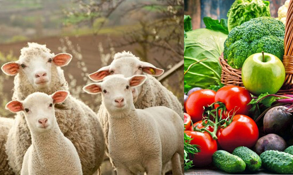 Veganismo – No consumir productos de origen animal